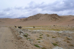 8. Pastoreo de burros, vegas de altura de Barros Negros, Diego de Almagro.