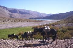 5. Vegas de Laguna Grande, cuenca alta del río Cazaderos, Huasco Alto.