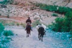 13 a. Arriero subiendo a la Cordillera.