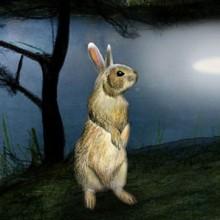Zorro-y-Conejo destacado